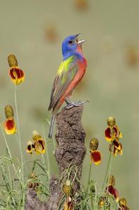 HOLY HOLY HOLY BIRD