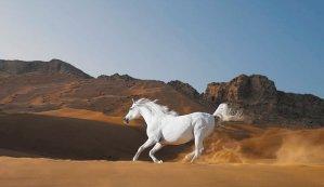 WHITEHORSE SAND