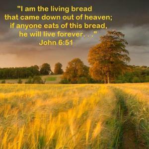 John 6-51 - Harvest Time
